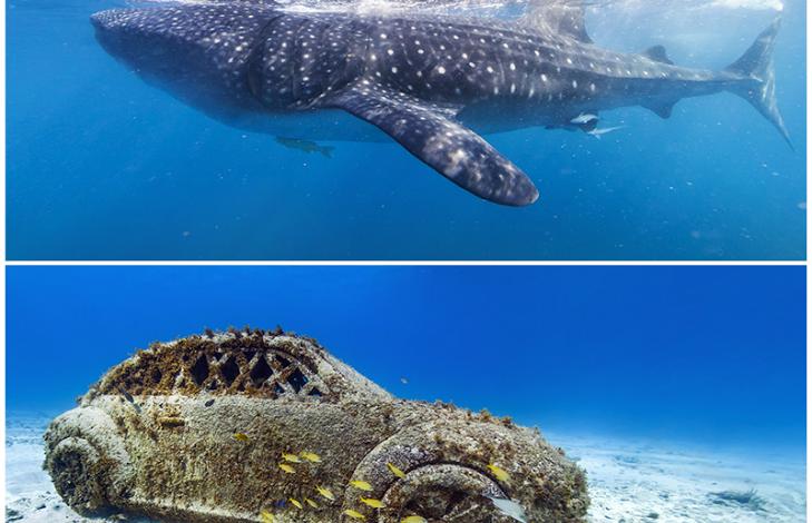 Google adds new underwater Street View scenes to Maps ... on google map hawaiian, google earth underwater, google street view, google underwater mr.doob, google gravity underwater,