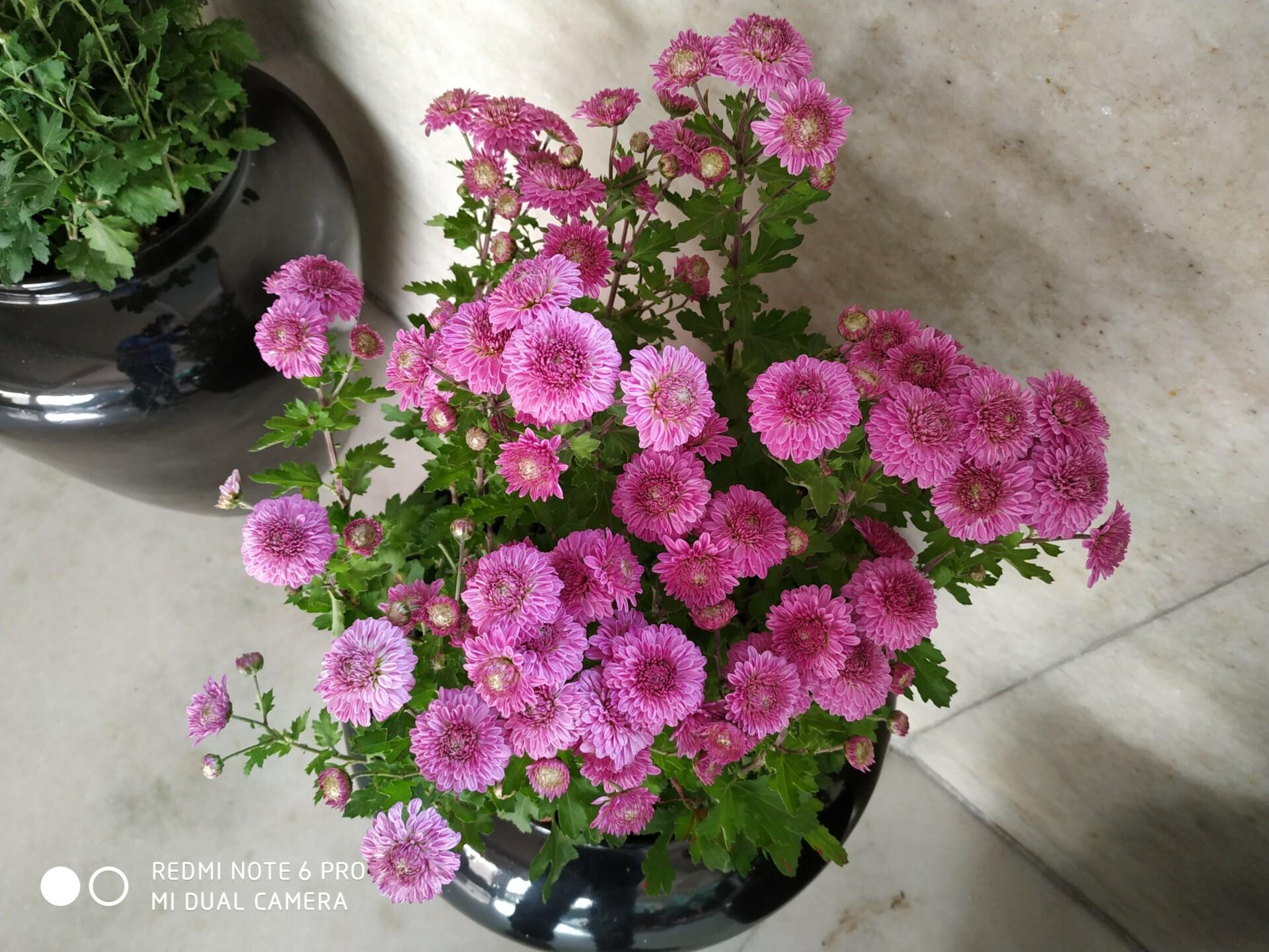 Redmi Note 6 Pro flowers sample shot