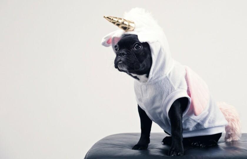 impostor dog
