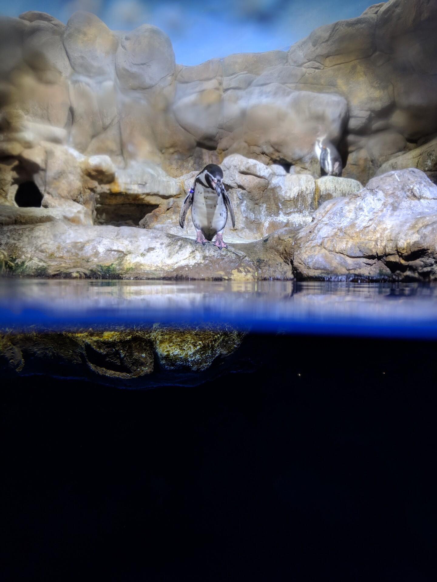 google pixel 3 camera sample penguin at zoo