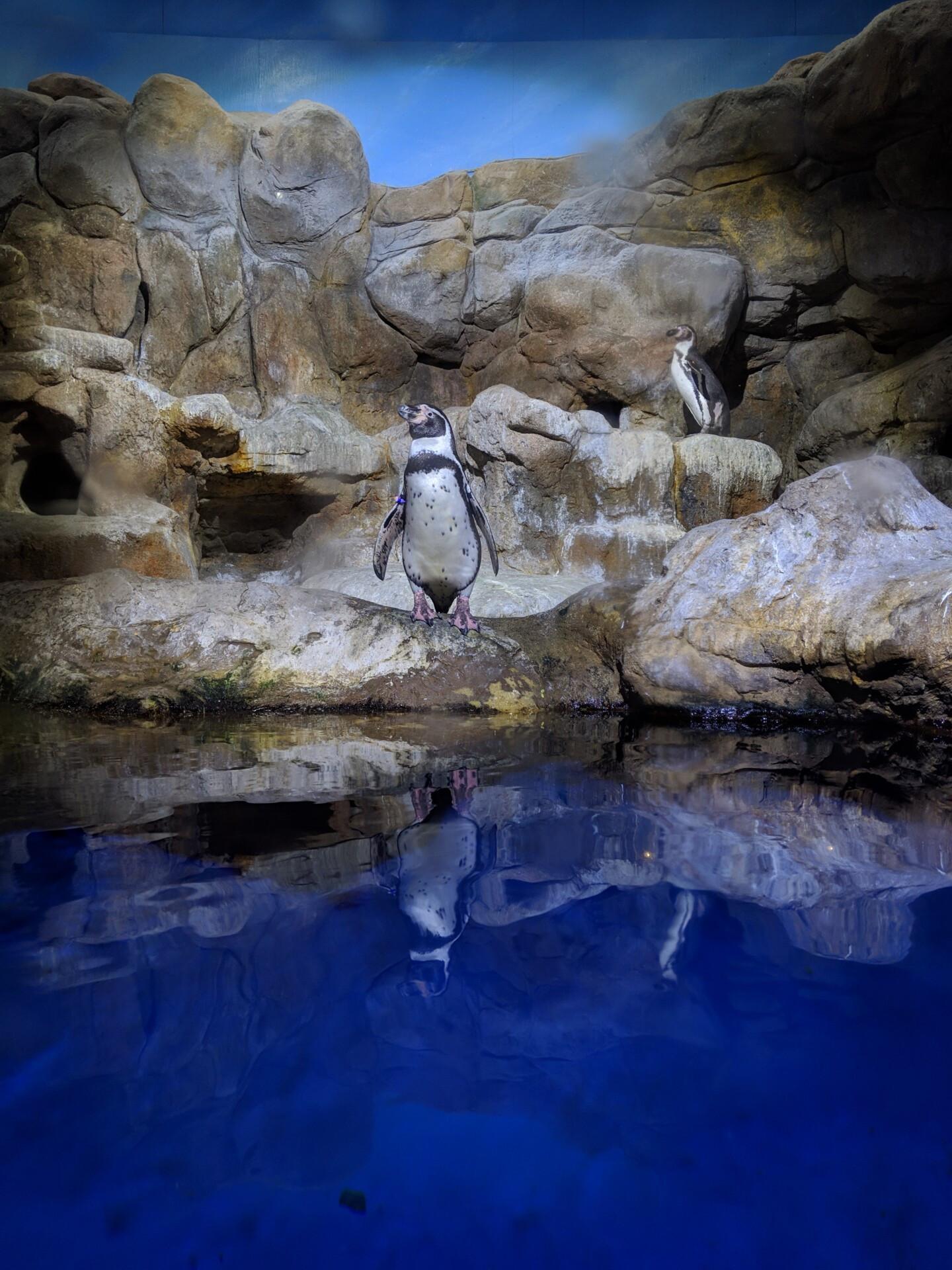 google pixel 3 camera sample penguin