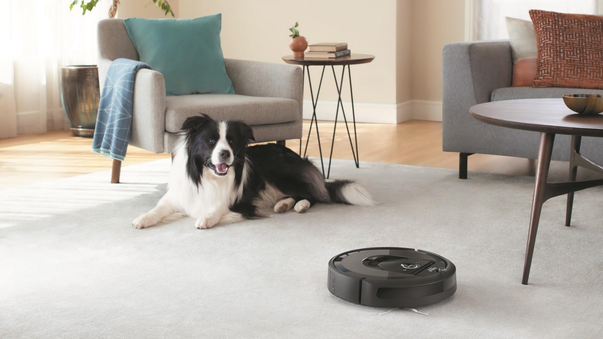 iRobot Roomba Vacuum Dog in Livingroom