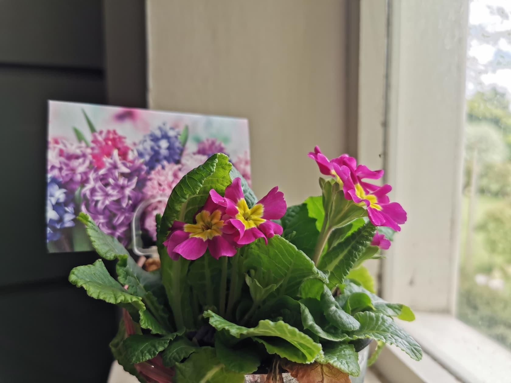 Huawei P30 Pro camera sample flower close up