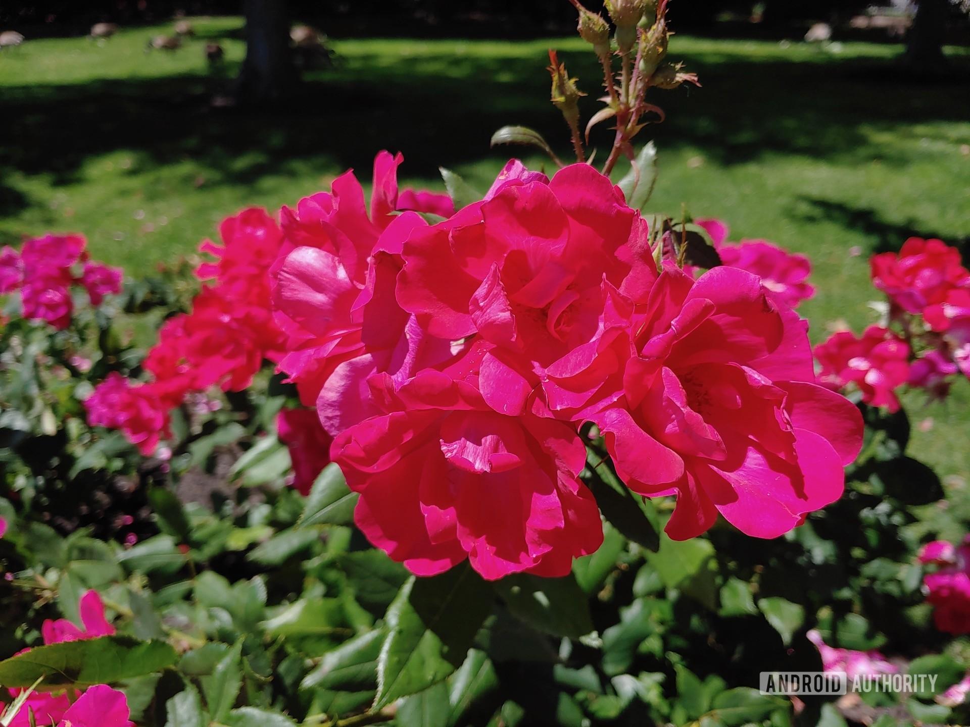 LG V50 ThinQ Review sample photo flower closeup