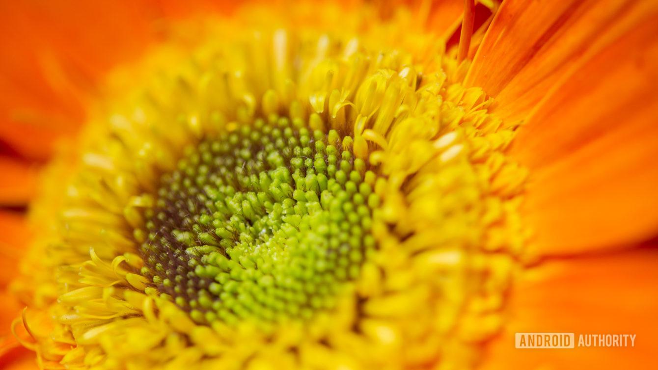Macro photography flower sample shot 1