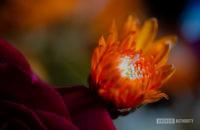 Macro photography flower sample shot 3