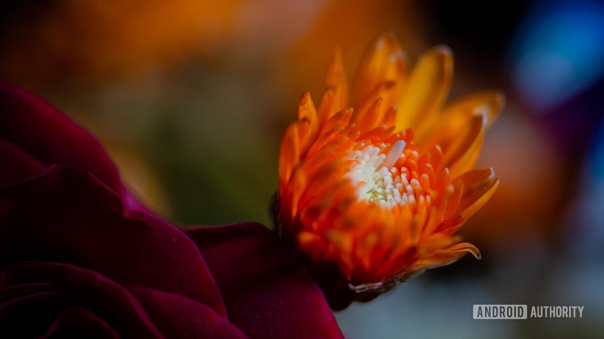 Macro photo - focal length and bokeh