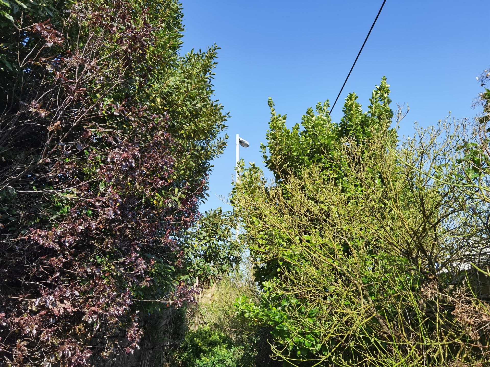P40 Pro camera sample outdoors wide angle shot at a lamp post