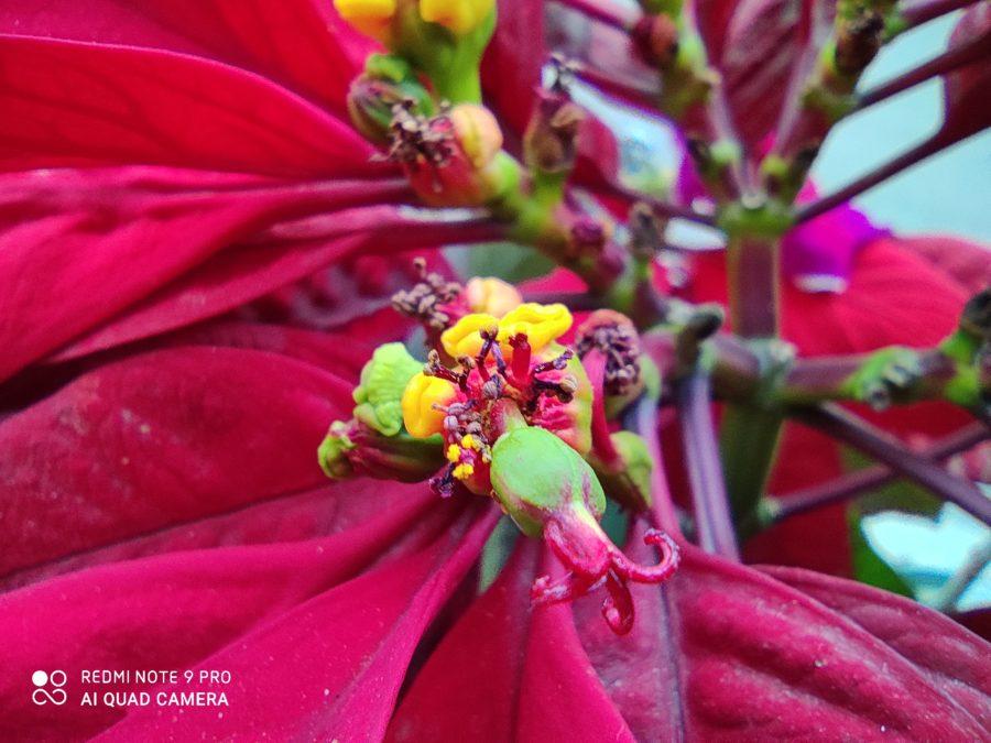 Redmi Note 9 Pro Camera Samples macro camera shot of flower