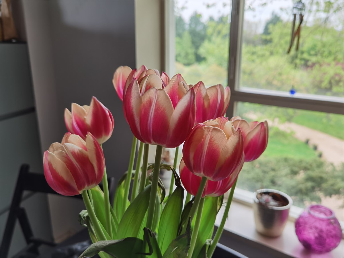 Flowers Huawei P40 Pro Resized