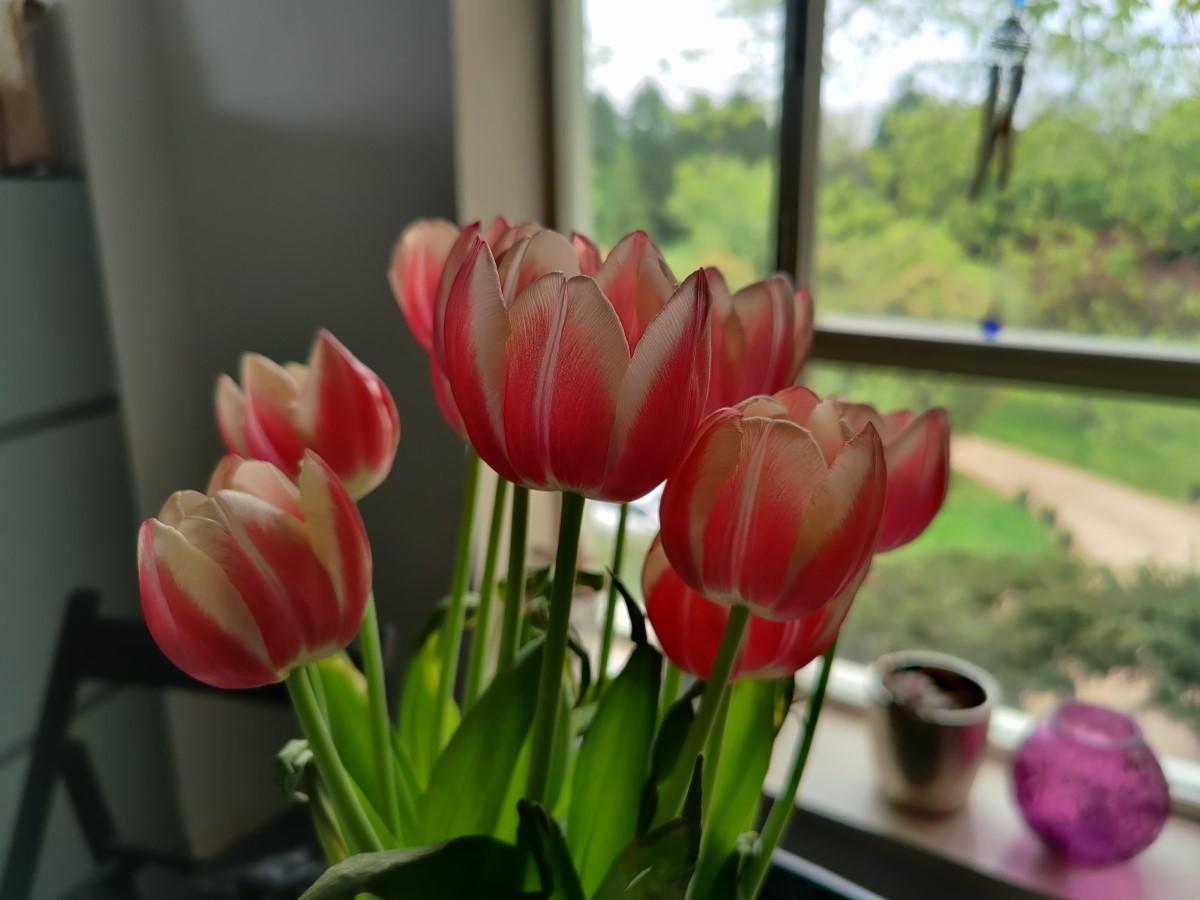 OnePlus 8 Pro - Colors