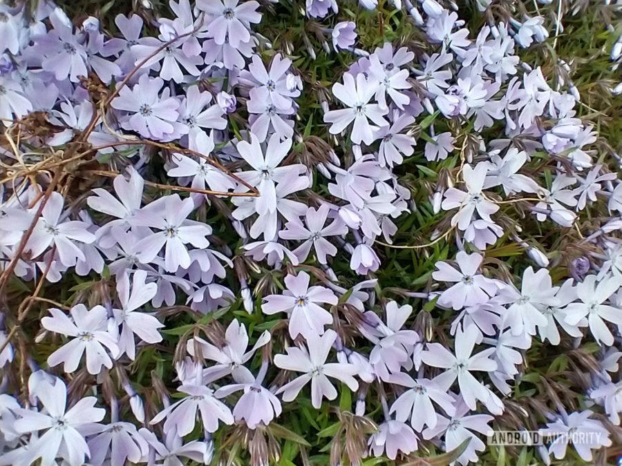 Motorola Moto G photo sample macro flowers
