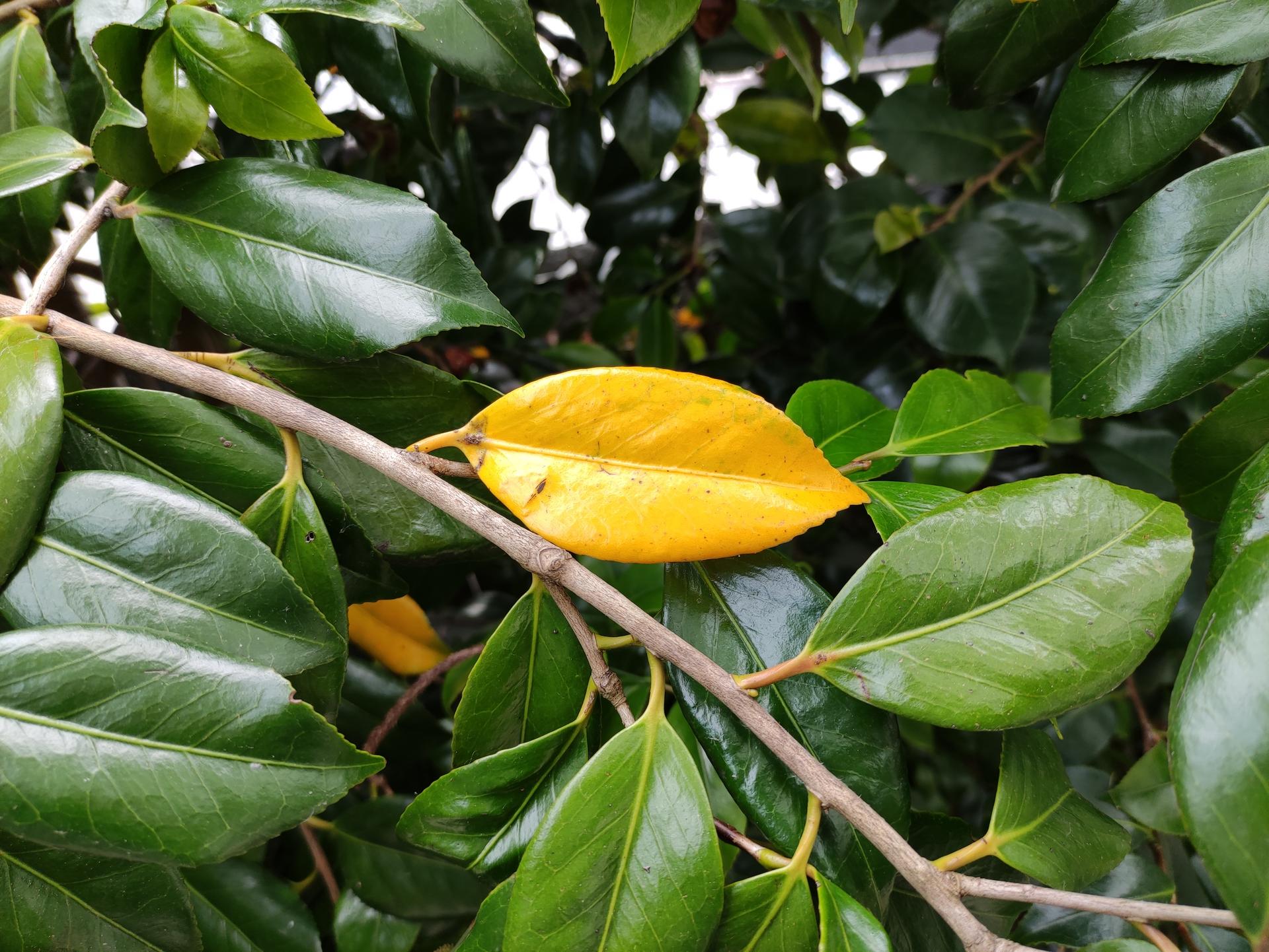 Poco F2 Pro camera test Color test of a standout leaf