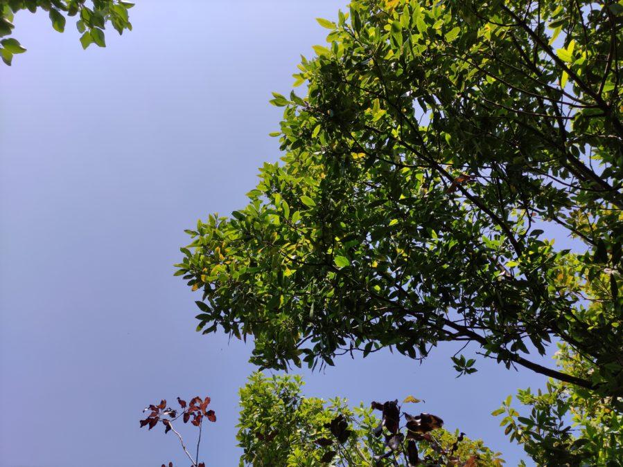 Poco F2 Pro против f1 f2 HDR дерево на фоне неба