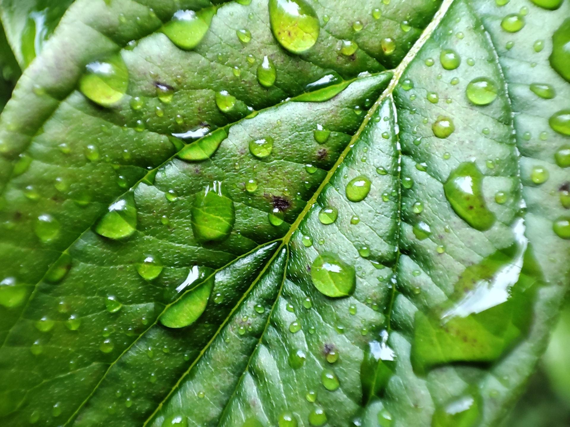 Pocophone F2 Pro macro test water drops on a leaf