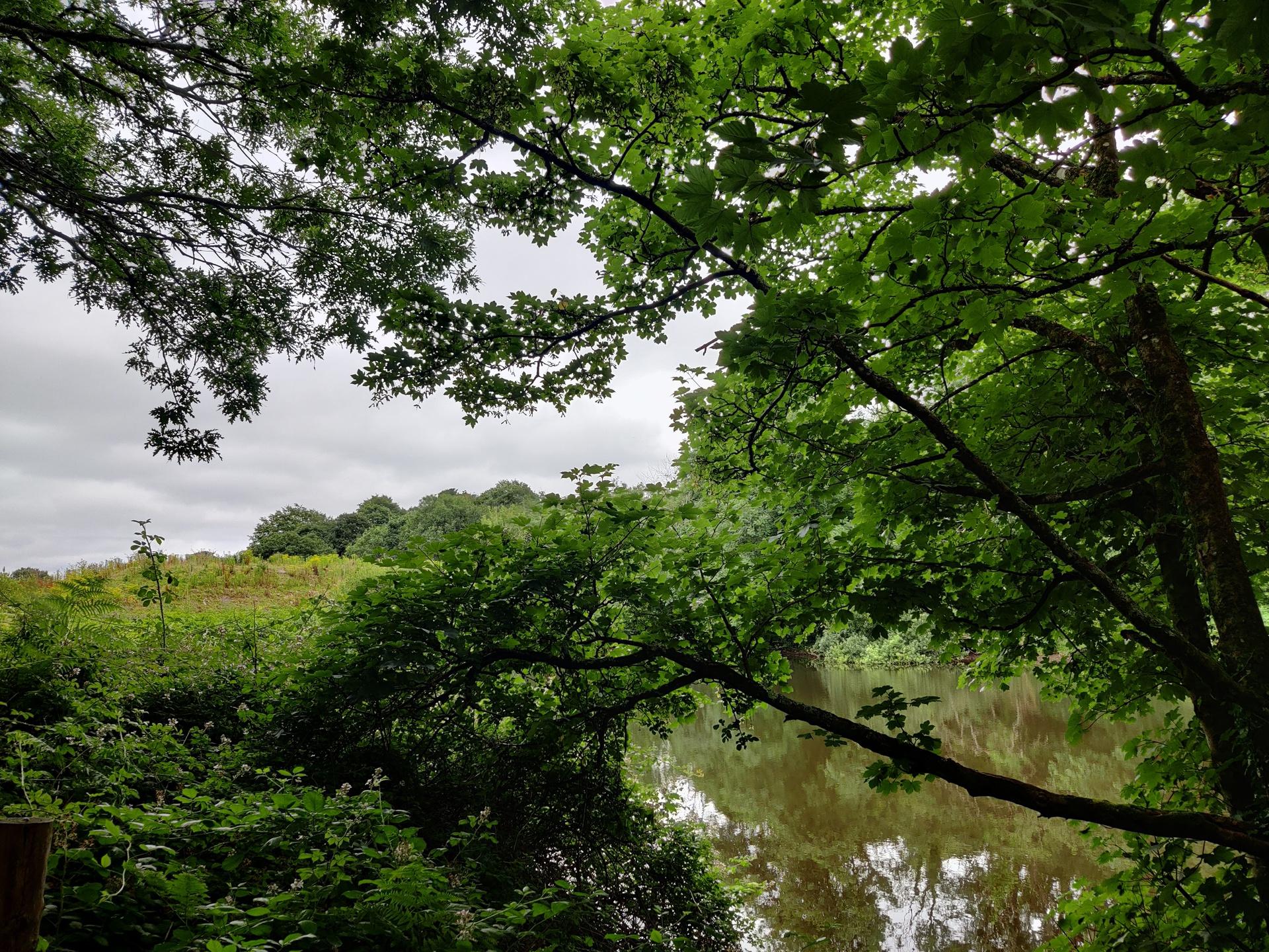 OnePlus Nord test image main camera shot under trees