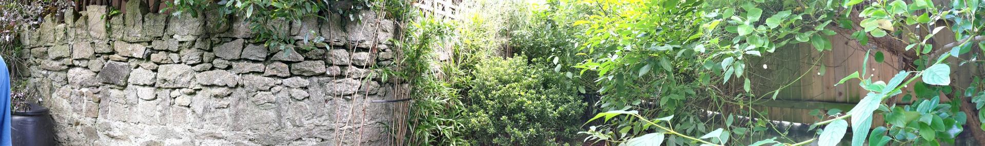 Asus Zenfone 7 Pro panorama in a garden