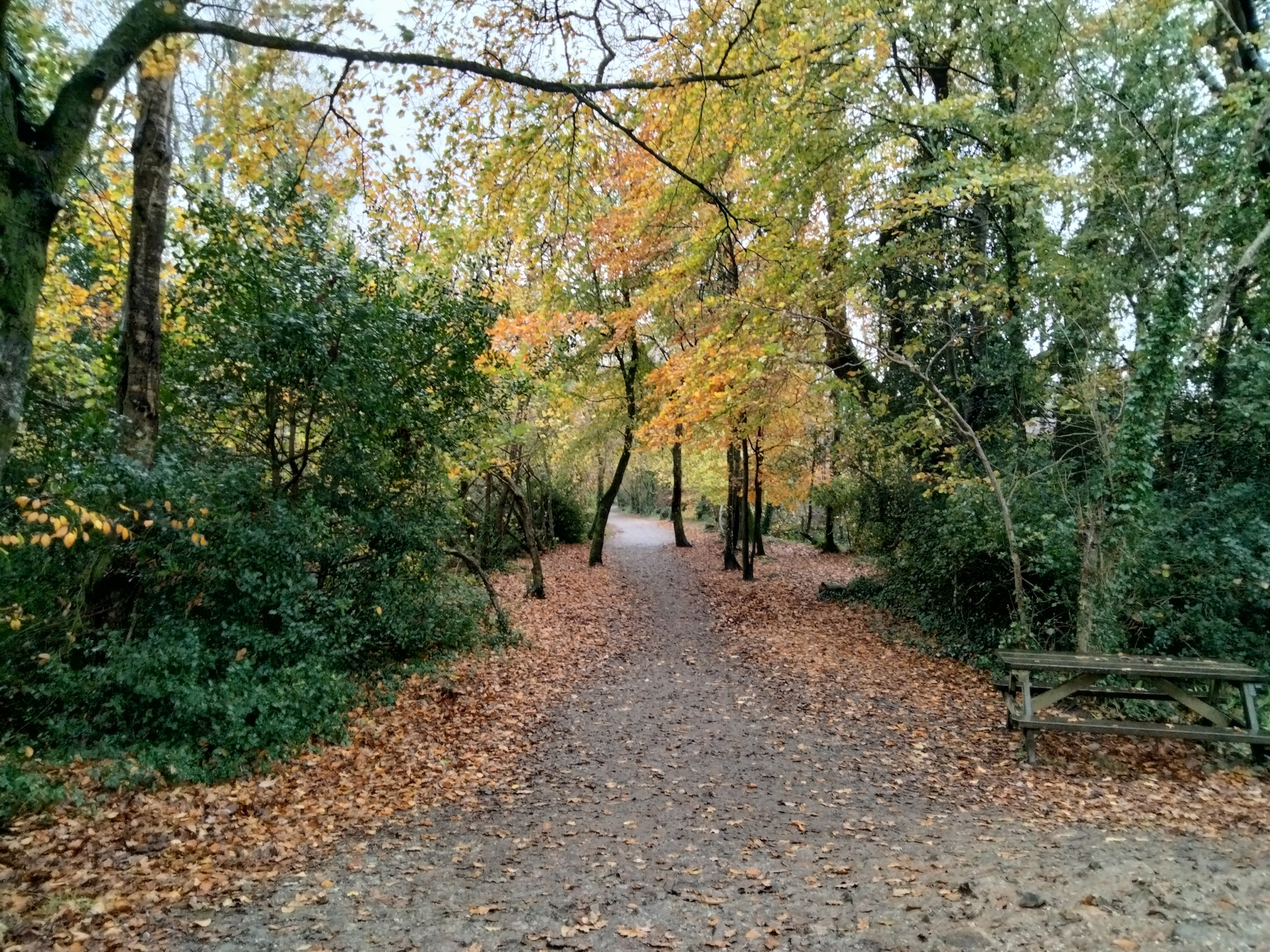 OnePlus Nord N100 photo sample of a leafy path