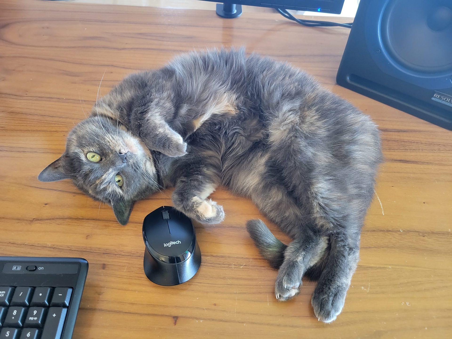 Samsung Galaxy S21 12MP Cat Photo