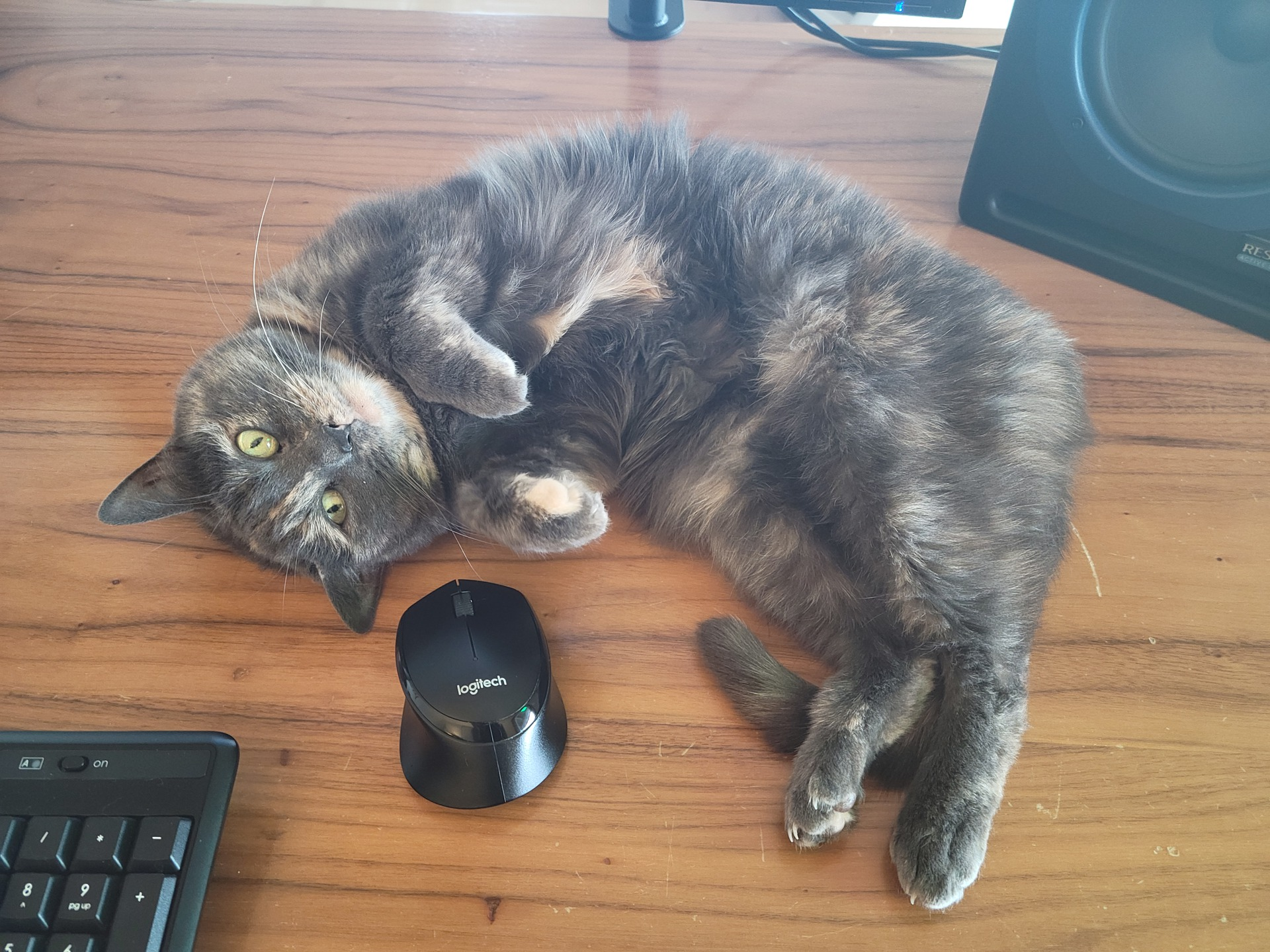 Samsung Galaxy S21 64MP Cat Photo
