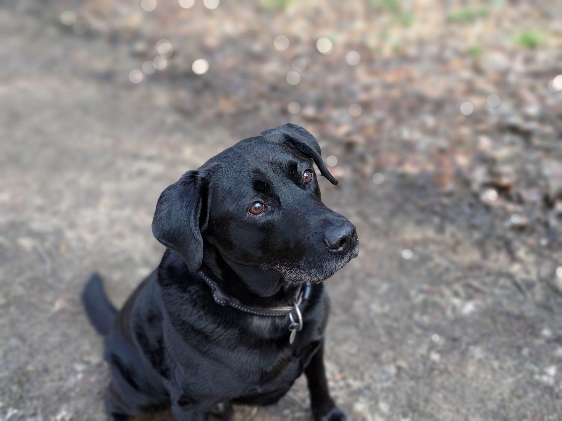 ROG Phone 5 portrait camera sample of a happy dog