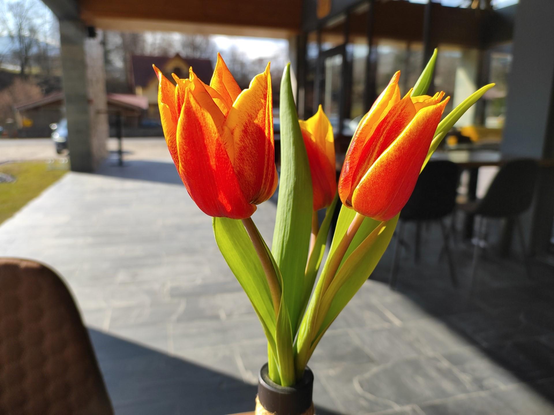 Red Magic 6 camera sample flowers in jar