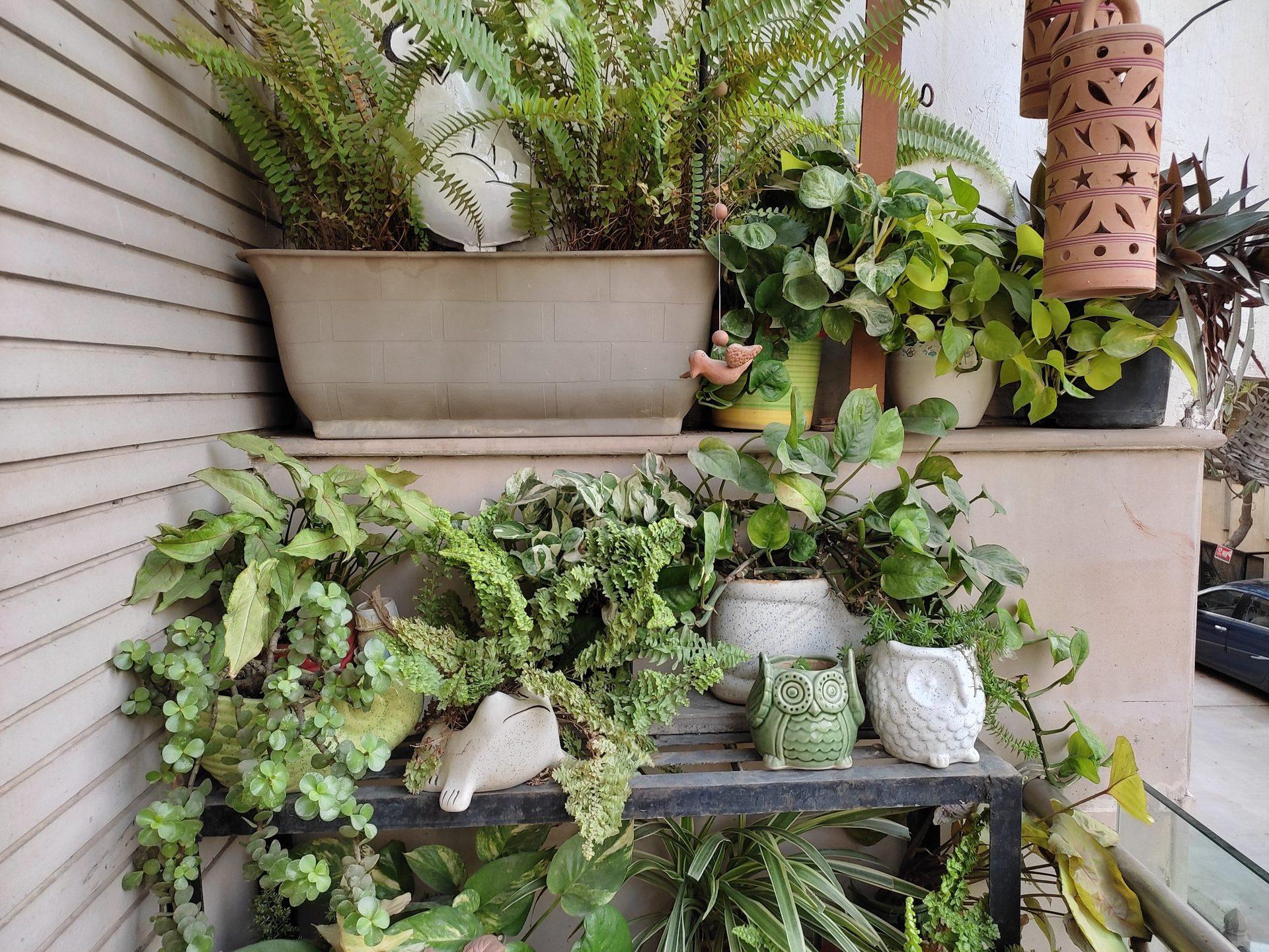 Redmi Note 10 outdoor foliage