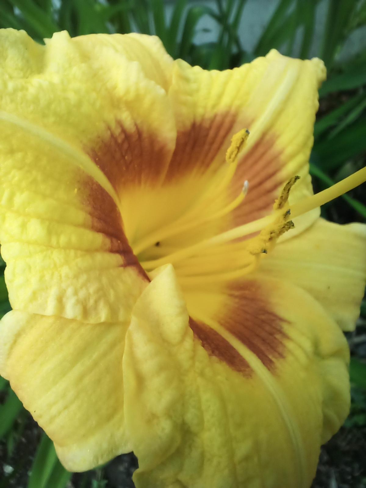 Doogee S96 Pro Camera Samples macro shot of a yellow flower.