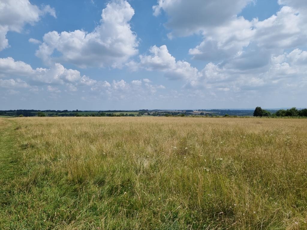 Dried grass field with blue sky shot on Samsung Galaxy S21 Ultra