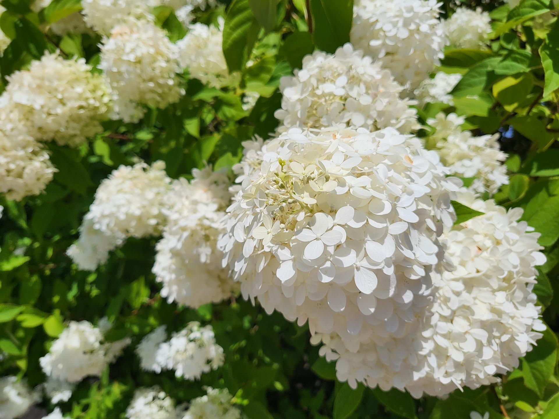 Samsung Galaxy Z Flip 3 photo sample flower closeup