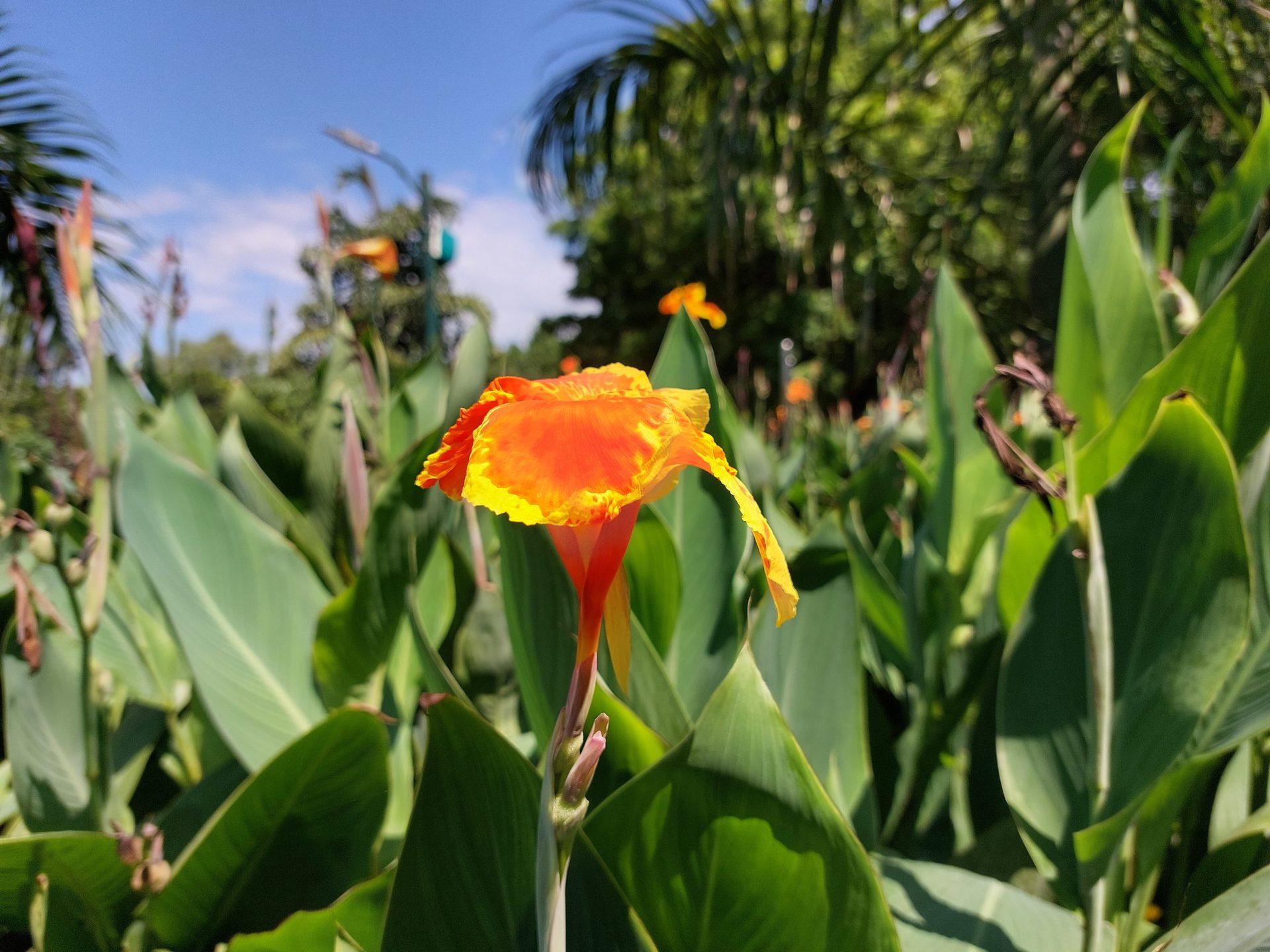 Samsung Galaxy A52s 5G rear camera shot of orange and green flower.