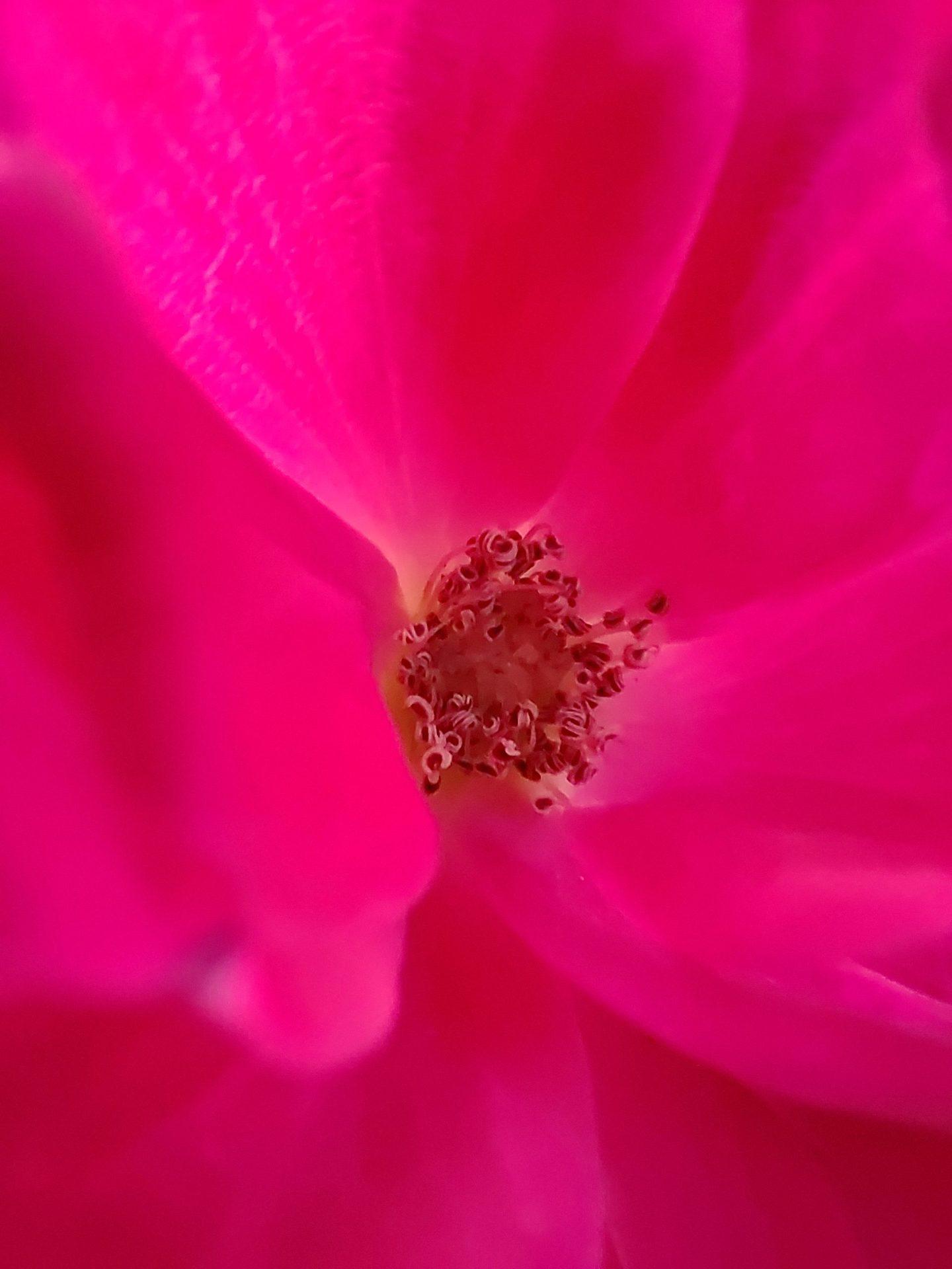 Macro picture of flower shot on ZTE Axon 30