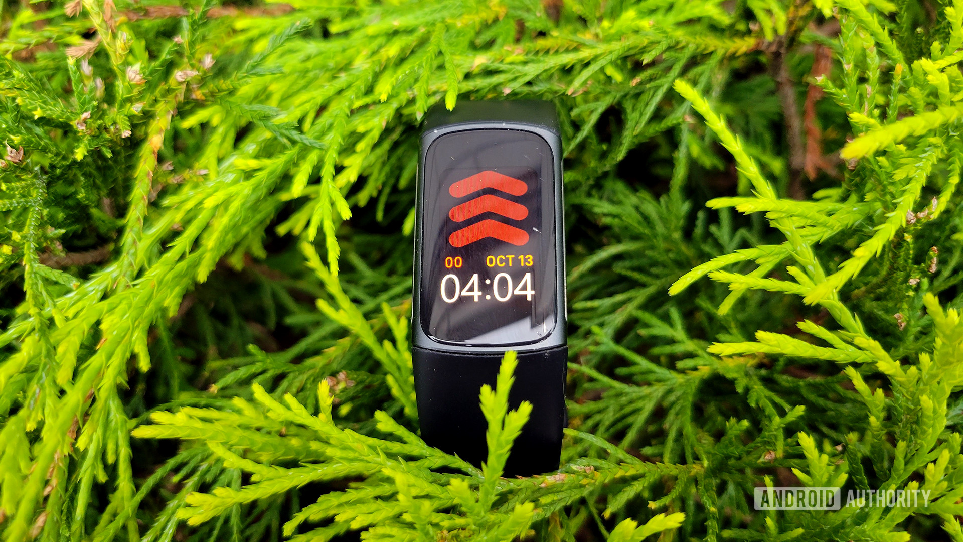 Fitbit Charge 5 Review In Bush