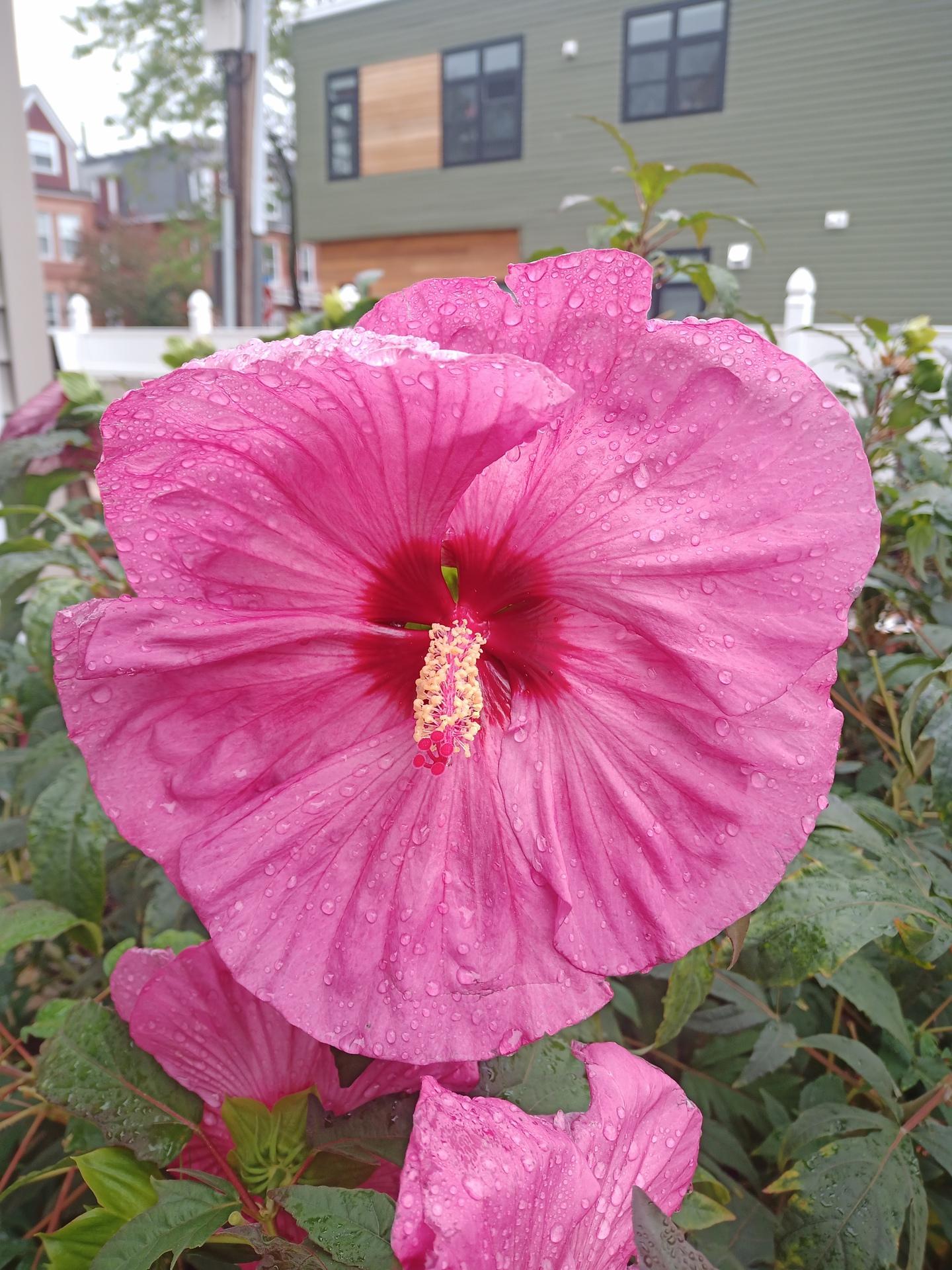 Photo of flower taken on Doogee S97 Pro